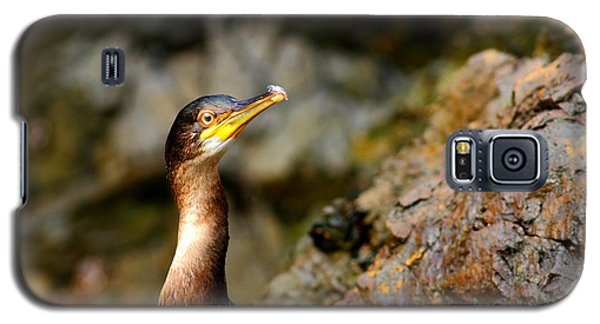 Galaxy S5 Case featuring the photograph Immature Shag by Richard Patmore