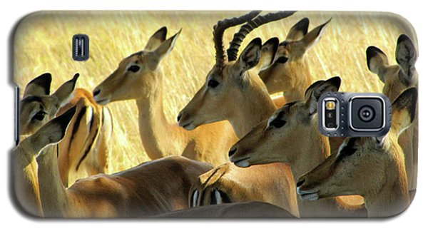 Impalas In The Plains Galaxy S5 Case