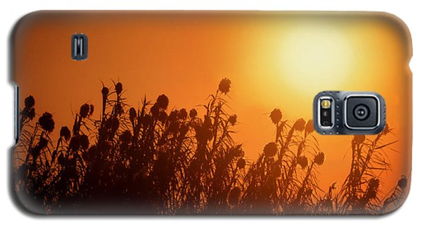 Impalila Island Sunset No. 3 Galaxy S5 Case by Joe Bonita