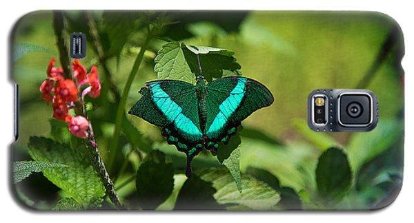 In A Butterfly World Galaxy S5 Case