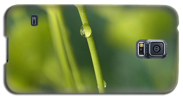 Galaxy S5 Case featuring the photograph In A Forest Of Spurge  by Connie Handscomb