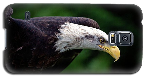 In For The Kill Galaxy S5 Case by Stephen Melia