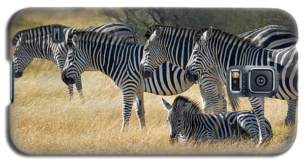 In Line Zebras Galaxy S5 Case