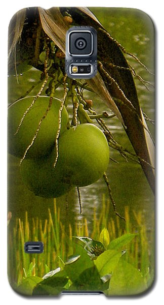 In My Backyard Galaxy S5 Case by Fanny Diaz