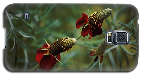 Galaxy S5 Case featuring the photograph In Rousseaus Garden by Douglas MooreZart