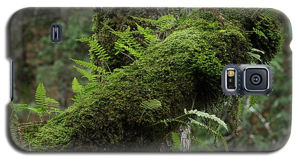 Galaxy S5 Case featuring the photograph In The Cool Of The Forest by Mike Eingle