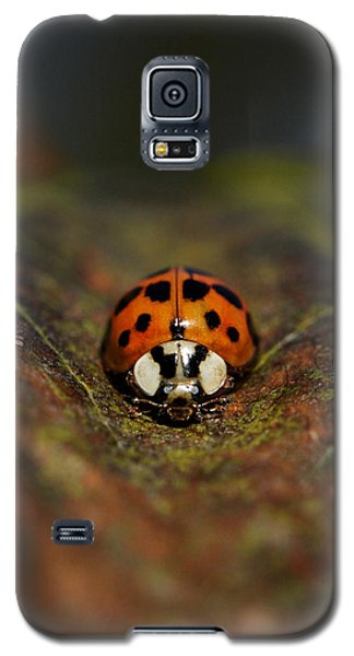 In The Groove Galaxy S5 Case by Doris Potter