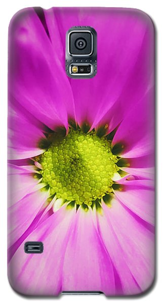 In The Pink Galaxy S5 Case