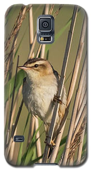 In The Reeds Galaxy S5 Case