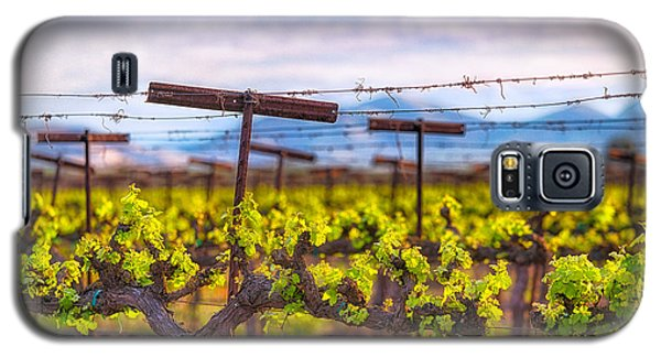 In The Vineyard Galaxy S5 Case
