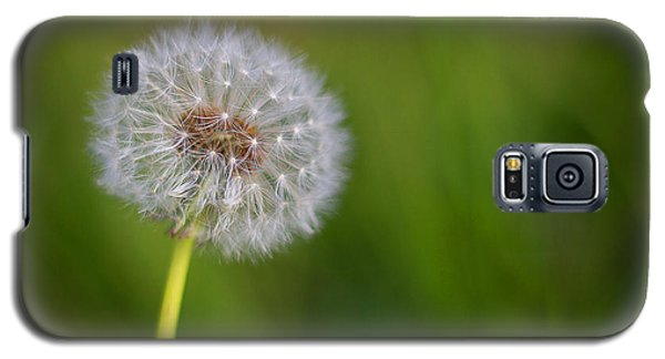 Galaxy S5 Case featuring the photograph In Your Own Time by Tim Nichols