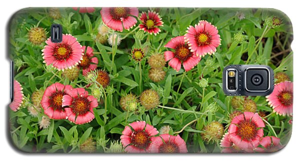 Indian Blanket Flowers Galaxy S5 Case
