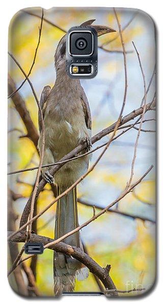 Indian Grey Hornbill Galaxy S5 Case