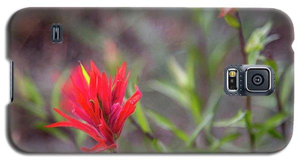 Indian Hawthorne Galaxy S5 Case