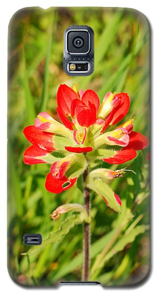 Indian Paintbrush Close Up Galaxy S5 Case