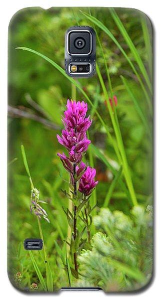 Magenta Paintbrush Galaxy S5 Case