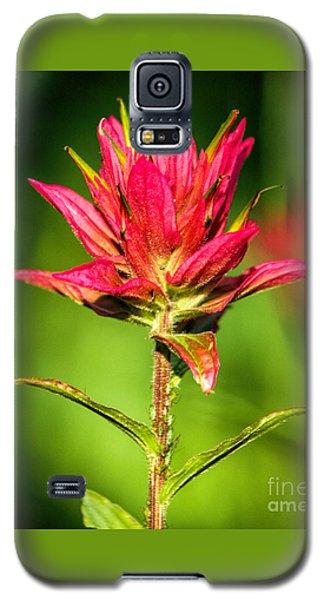 Indian Paintbrush Galaxy S5 Case