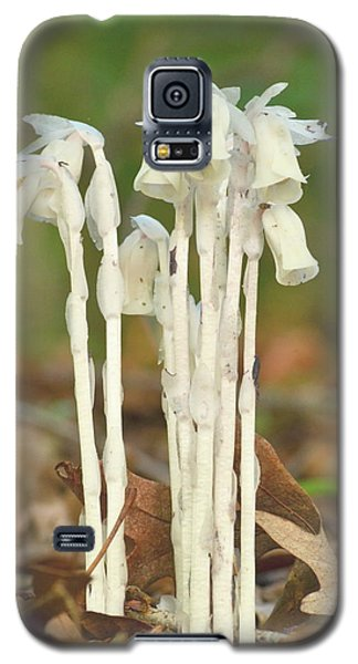 Indian Pipes Galaxy S5 Case by JD Grimes