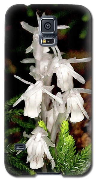 Galaxy S5 Case featuring the photograph Indian Pipes On Club Moss by Meta Gatschenberger