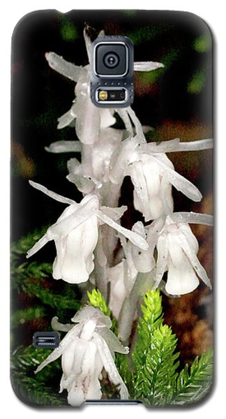 Indian Pipes On Club Moss Galaxy S5 Case