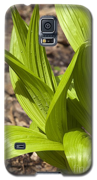 Indian Poke -veratrum Veride- Galaxy S5 Case