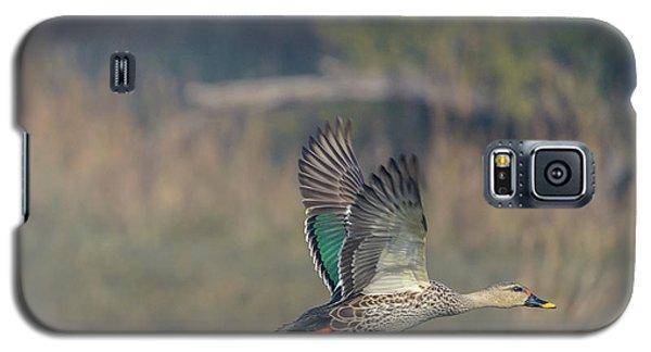 Indian Spot-billed Duck 03 Galaxy S5 Case