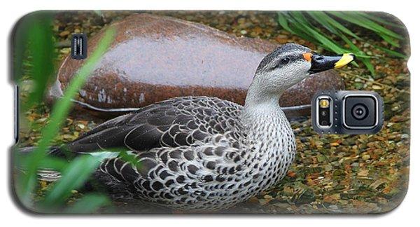 Indian Spot-billed Duck Galaxy S5 Case