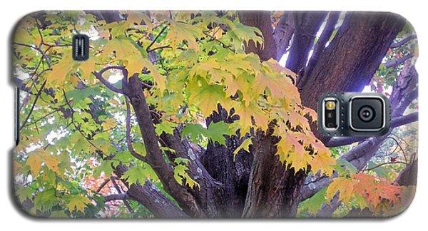 Indian Tree Galaxy S5 Case