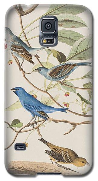 Audubon Galaxy S5 Case - Indigo Bird by John James Audubon