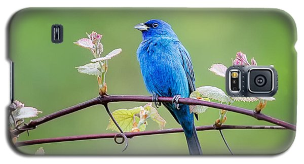 Indigo Bunting Perched Galaxy S5 Case by Bill Wakeley