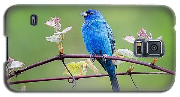 Indigo Bunting Perched Galaxy S5 Case