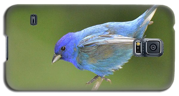 Indigo Bunting Rock Galaxy S5 Case by Alan Lenk