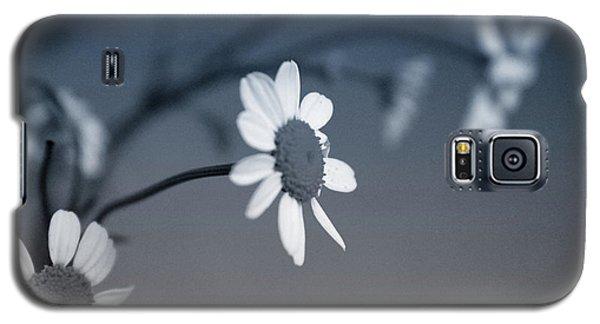 Daisy Galaxy S5 Case - Indigo Daisies 1- Art By Linda Woods by Linda Woods