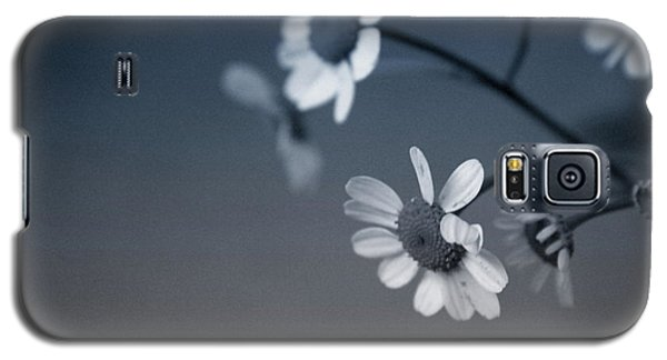 Daisy Galaxy S5 Case - Indigo Daisies 2- Art By Linda Woods by Linda Woods