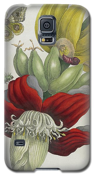 Inflorescence Of Banana, 1705 Galaxy S5 Case