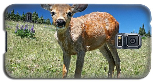 Inquisitive Blacktail Fawn Galaxy S5 Case