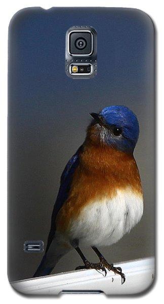Inquisitive Bluebird Galaxy S5 Case