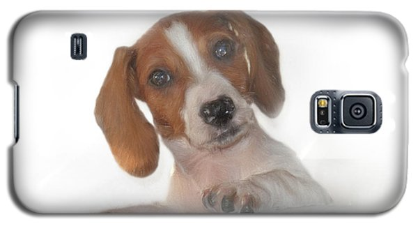 Galaxy S5 Case featuring the photograph Inquisitive Dachshund by David and Carol Kelly