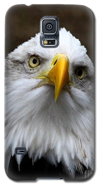 Inquisitive Eagle Galaxy S5 Case