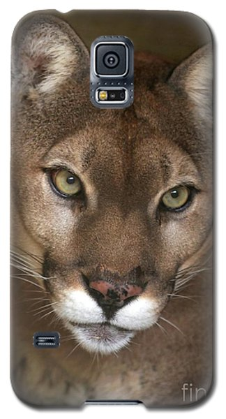 Intense Cougar Galaxy S5 Case