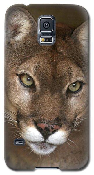 Intense Cougar Galaxy S5 Case