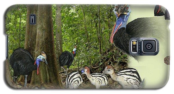 Zoo Nature Interpretation Panel Cassowaries Blue Quandong Galaxy S5 Case