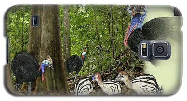 Zoo Nature Interpretation Panel Cassowaries Blue Quandong Galaxy S5 Case