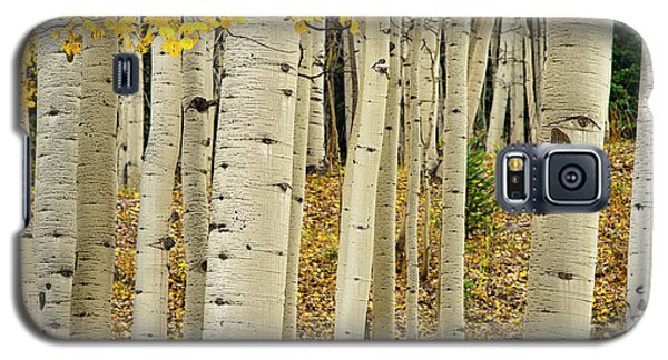 Galaxy S5 Case featuring the photograph Into The Forest by Gary Lengyel
