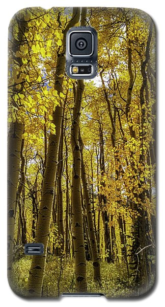 Into The Gold Galaxy S5 Case