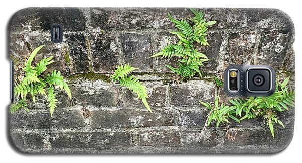 Intrepid Ferns Galaxy S5 Case