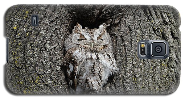 Invincible Screech Owl Galaxy S5 Case by Stephen Flint