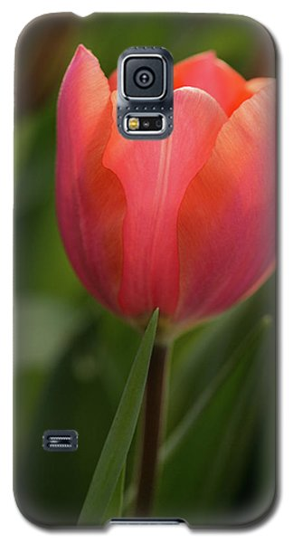 Galaxy S5 Case featuring the photograph Iridescent Tulip by Mary Jo Allen