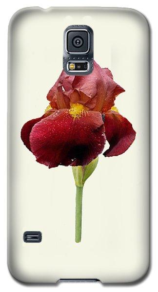 Galaxy S5 Case featuring the photograph Iris Vitafire Cream Background by Paul Gulliver