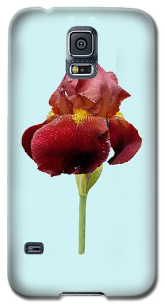 Galaxy S5 Case featuring the photograph Iris Vitafire Blue Background by Paul Gulliver